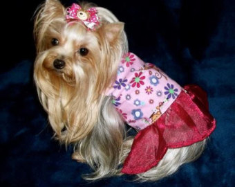 Female Dog Clothes photo - 2