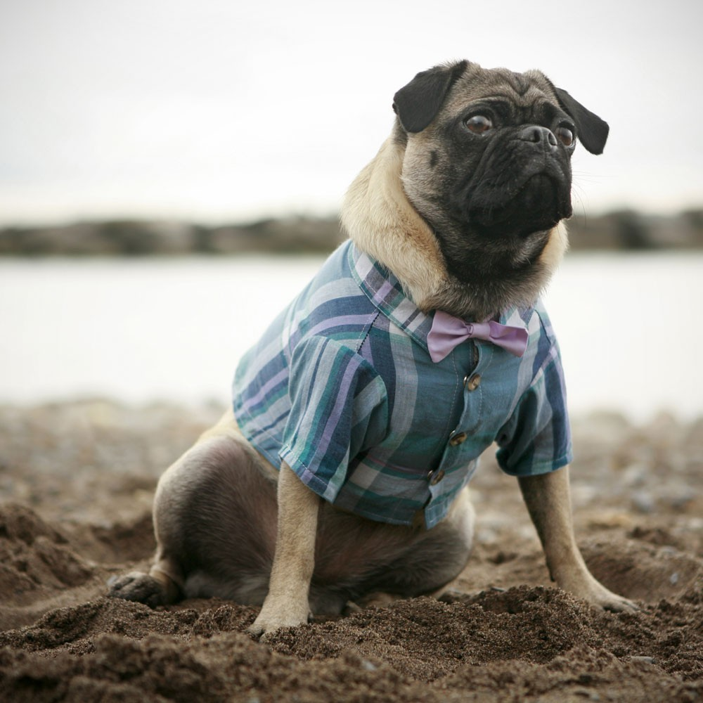 Funny Clothes For Dogs photo - 1