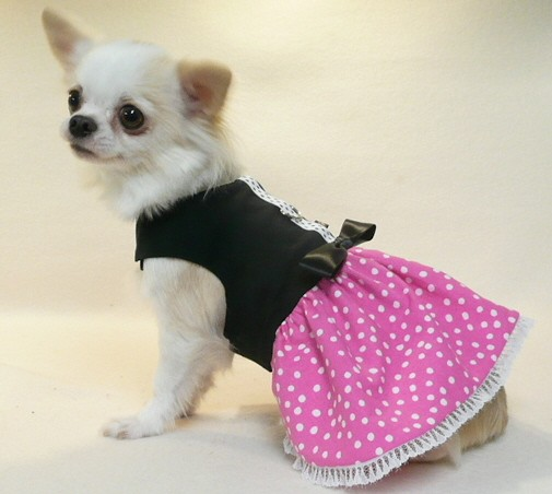 Girl Chihuahua Clothes photo - 1