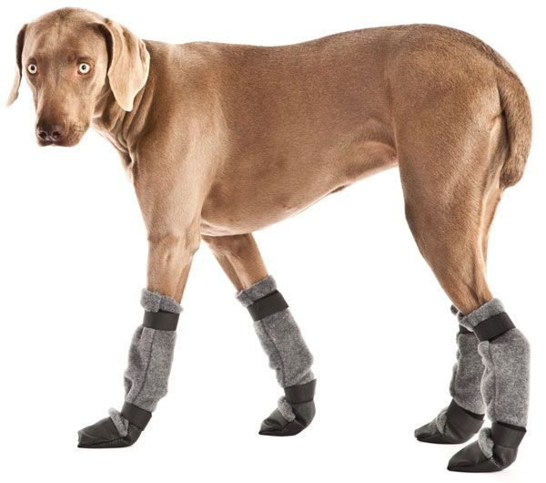 Great Dane Dog Clothes photo - 1