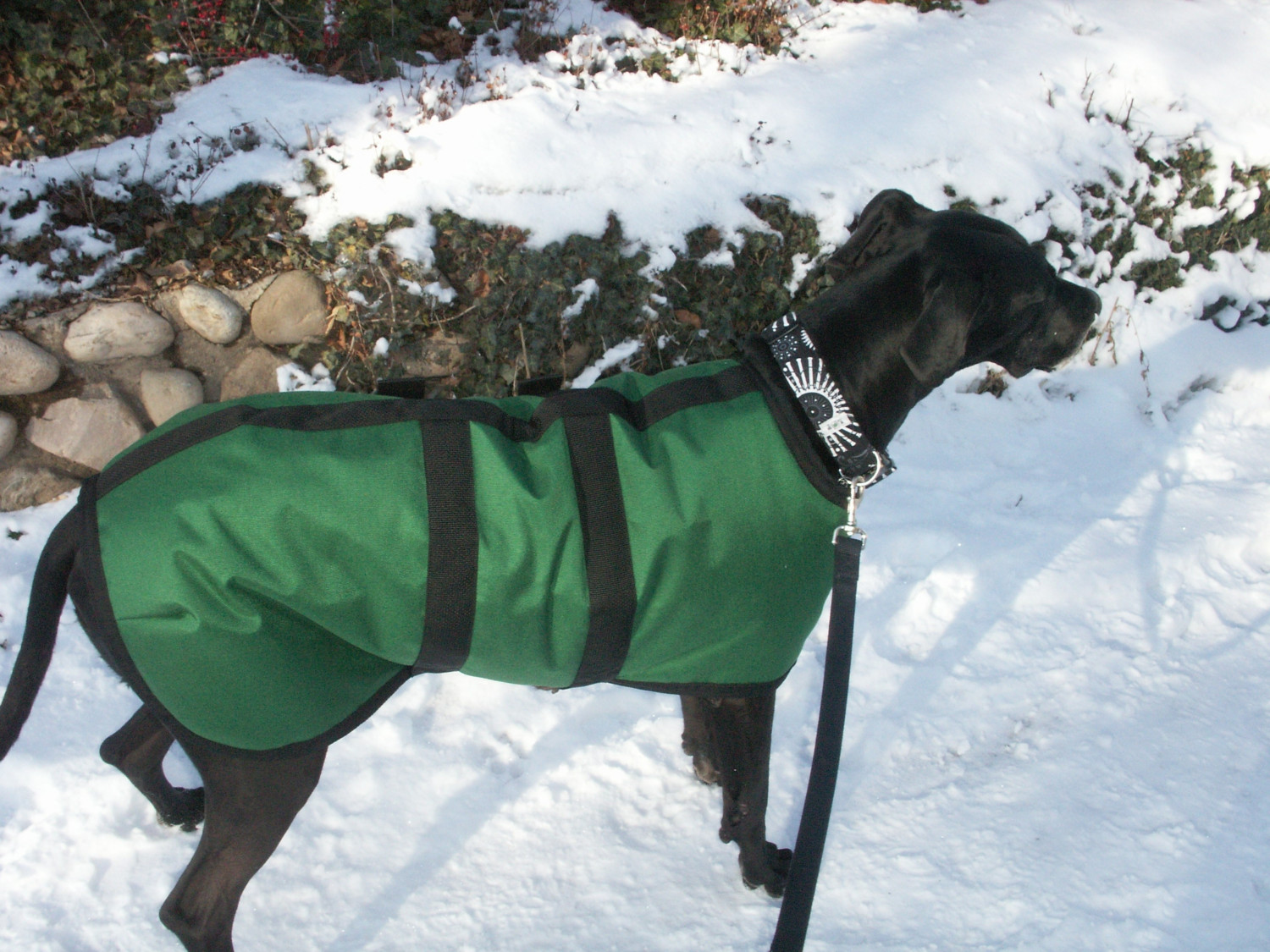 Great Dane Winter Coats photo - 3