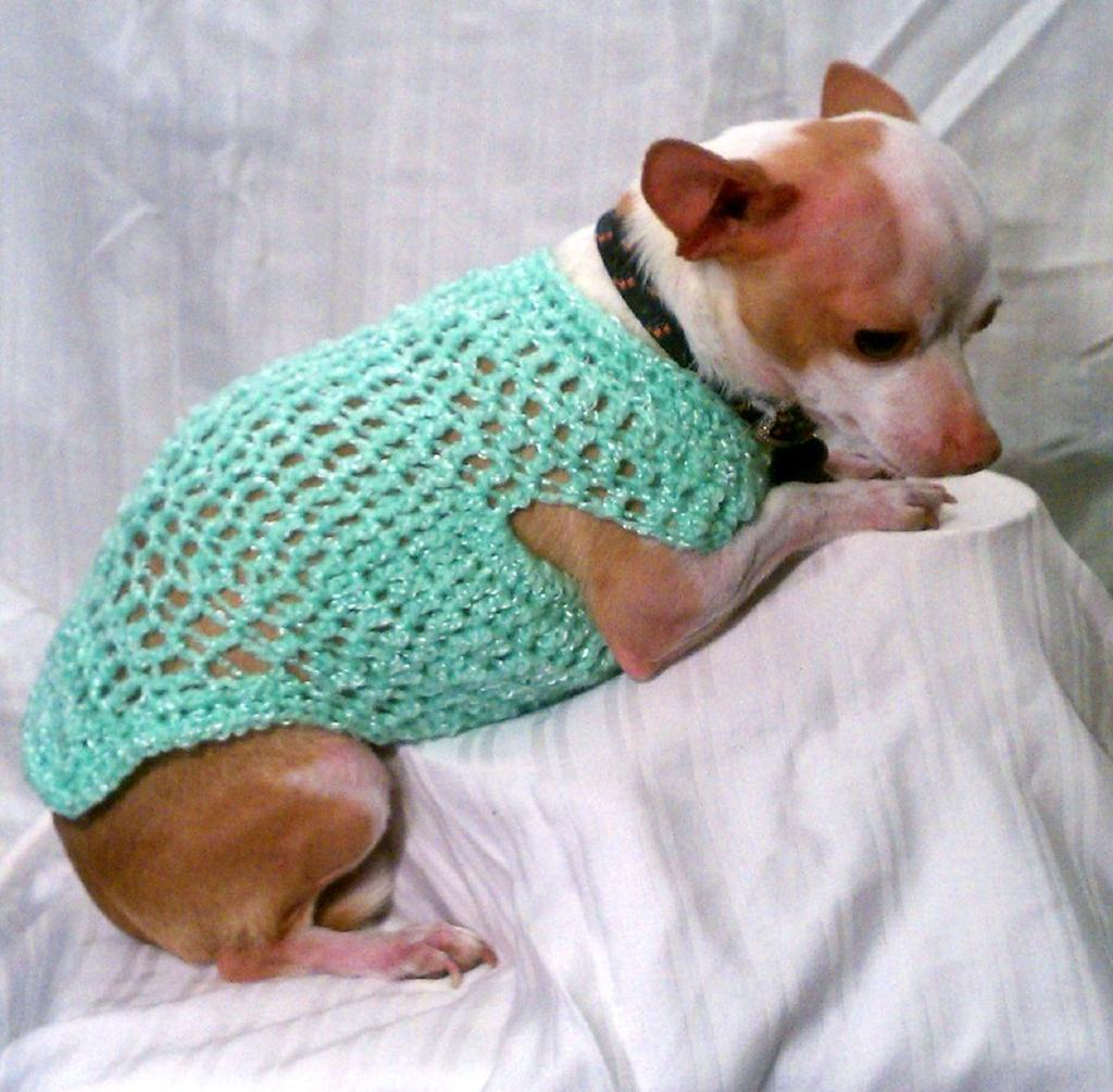 Green Dog Sweater photo - 1