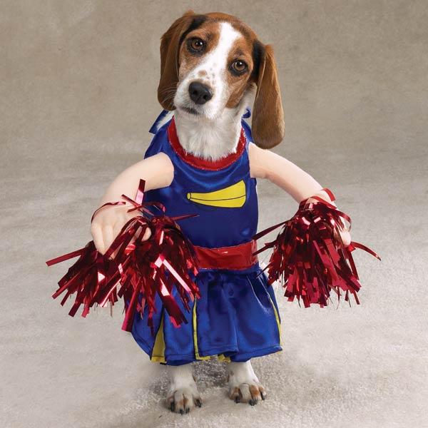 Halloween Dog Outfits photo - 1