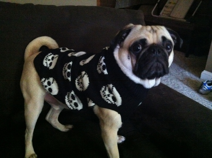 Halloween Dog Sweaters ▻ Dress The Dog , clothes for your pets!