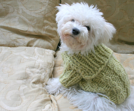 Handmade Dog Clothes photo - 1