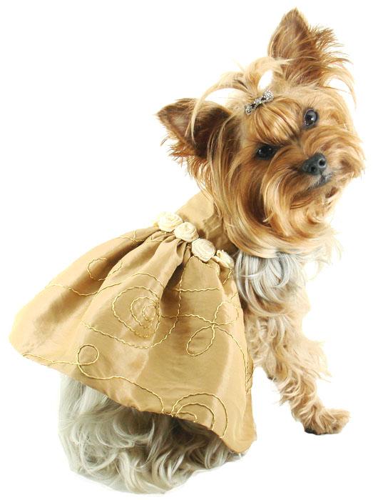High Fashion Dog Clothes photo - 1