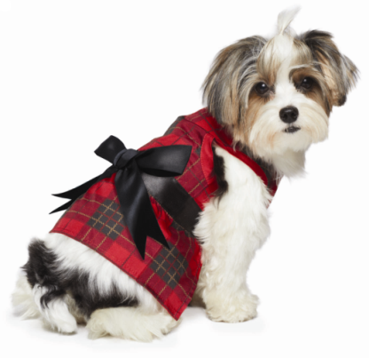 Holiday Dog Clothes photo - 1