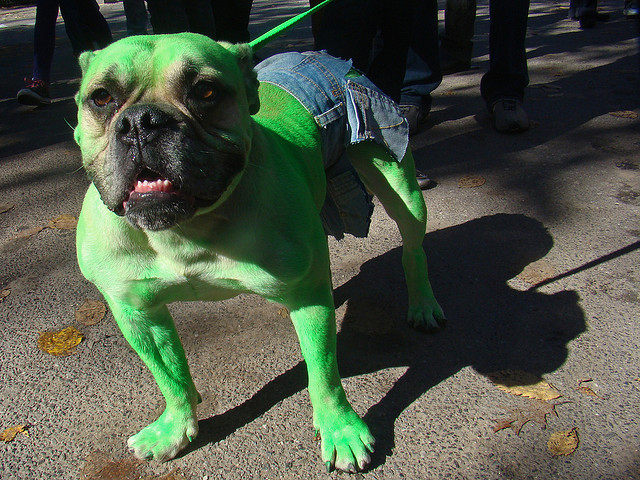 Hulk Costume For Dogs photo - 1
