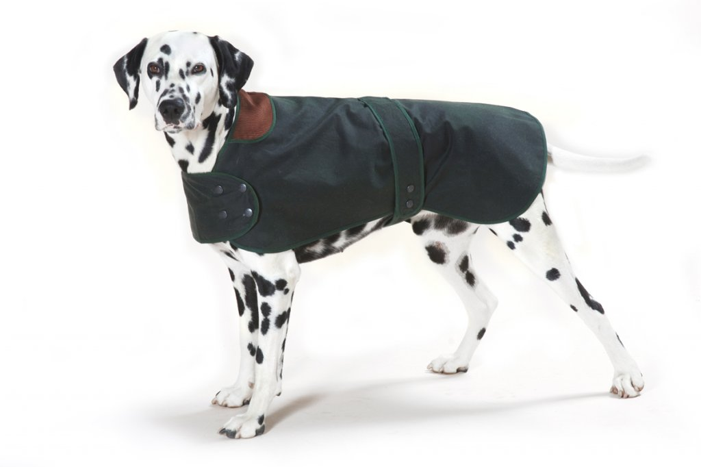 Hunter Dog Coats photo - 1