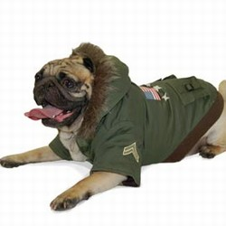 Jacket Dog photo - 1