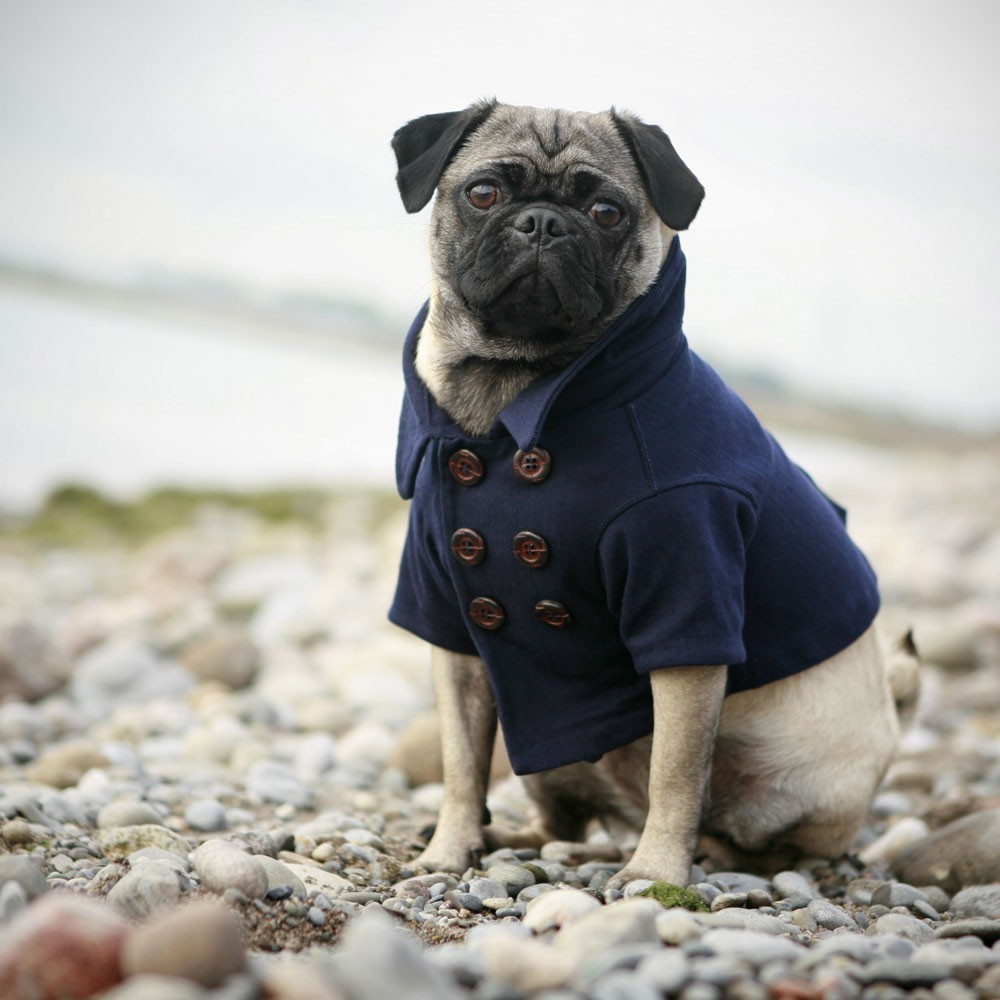 Jackets For Pugs ▻ Dress The Dog , clothes for your pets!