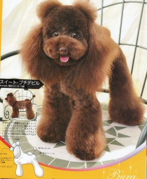 Japanese Poodle Haircuts photo - 2