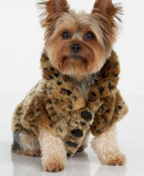 Leopard Print Dog Coat photo - 1