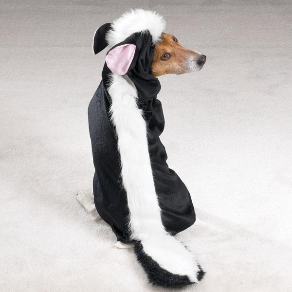 Little Dog Costumes photo - 1