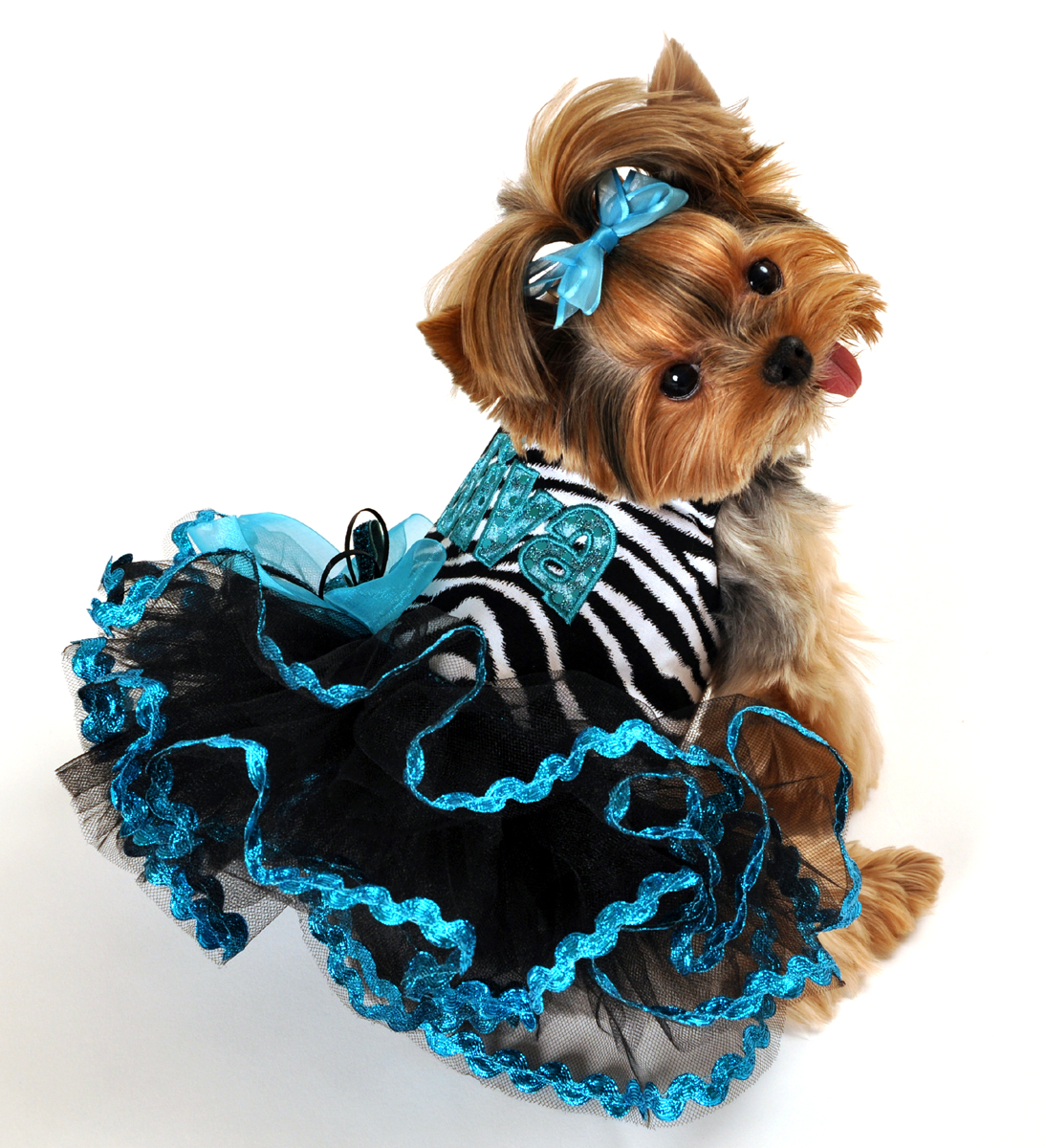 Little Dog Fashion photo - 1