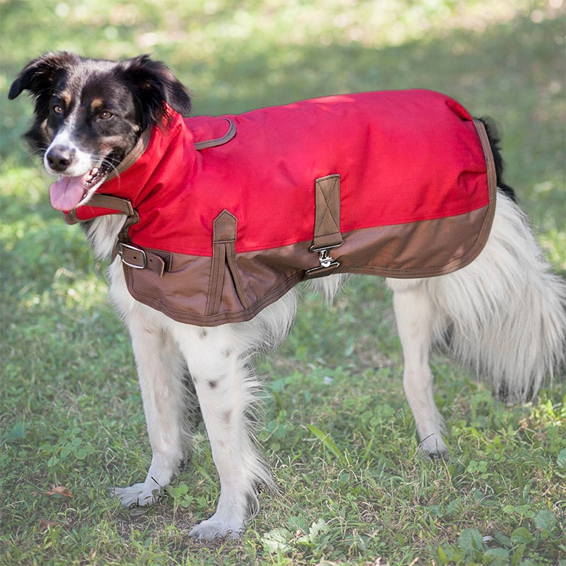 Outdoor Coats For Dogs photo - 1