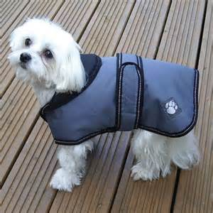 Outerwear For Dogs photo - 1