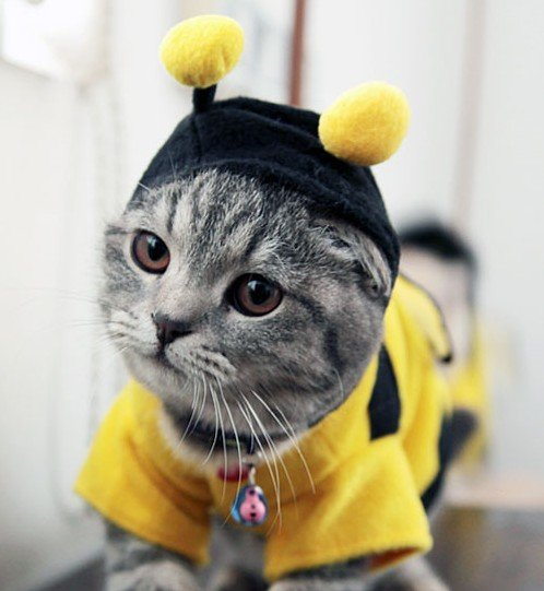 Pet Clothes For Cats photo - 1