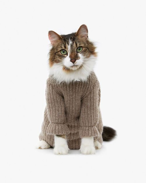 Pet Clothes For Cats photo - 2