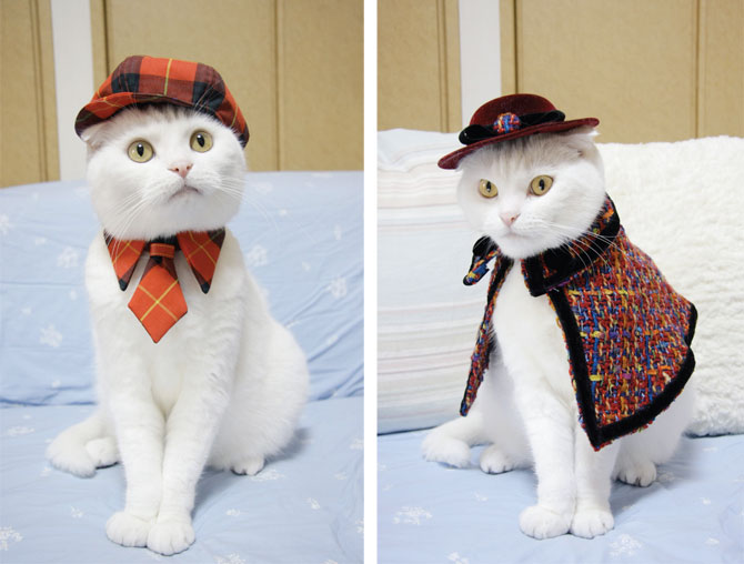 Pet Clothes For Cats photo - 3