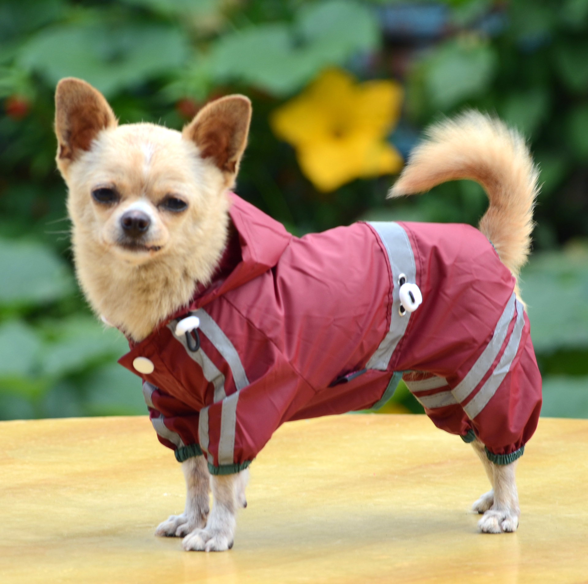 Pet Clothes For Small Dogs photo - 3