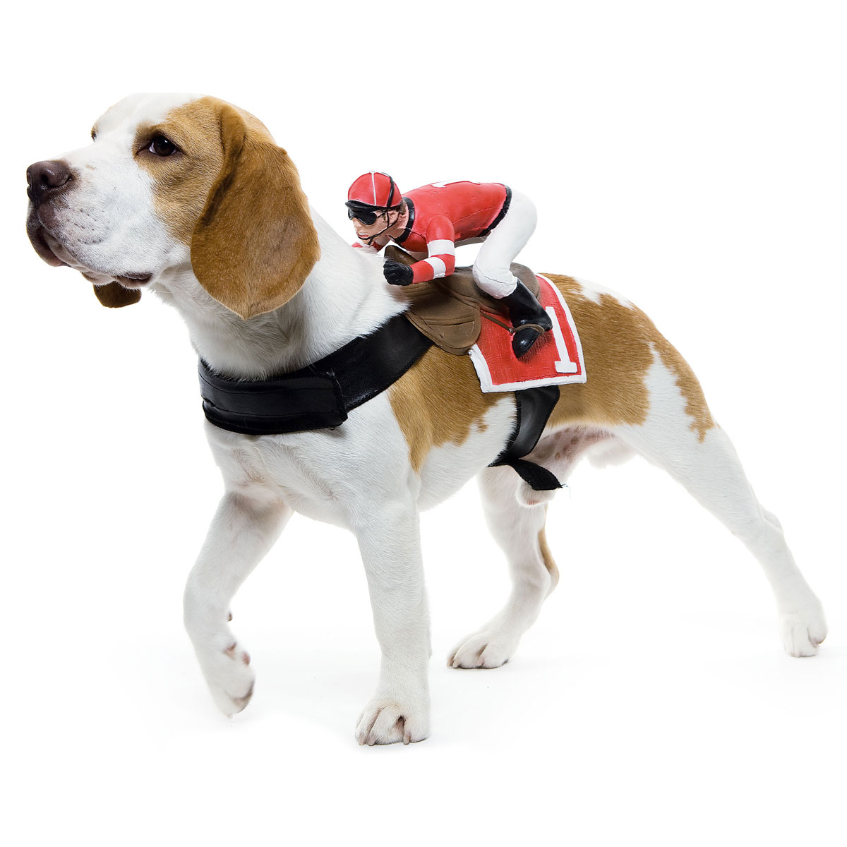 Pet Costumes For Dogs photo - 2