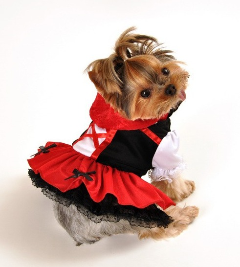 Pet Costumes For Small Dogs photo - 2