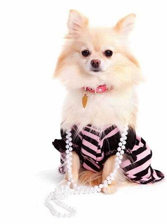 Pet Fashion photo - 2
