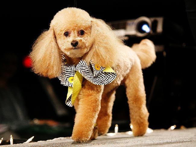 Pet Fashion photo - 3