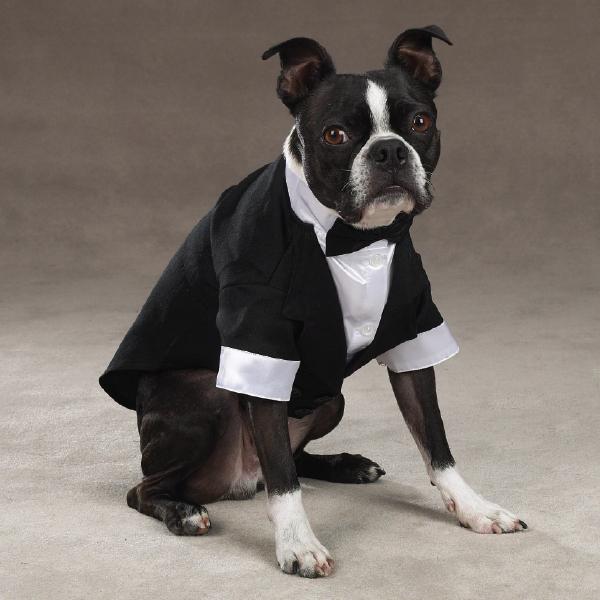 Pet Tuxedo photo - 3