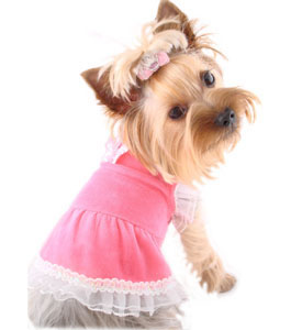 Pink Puppy Clothes photo - 1