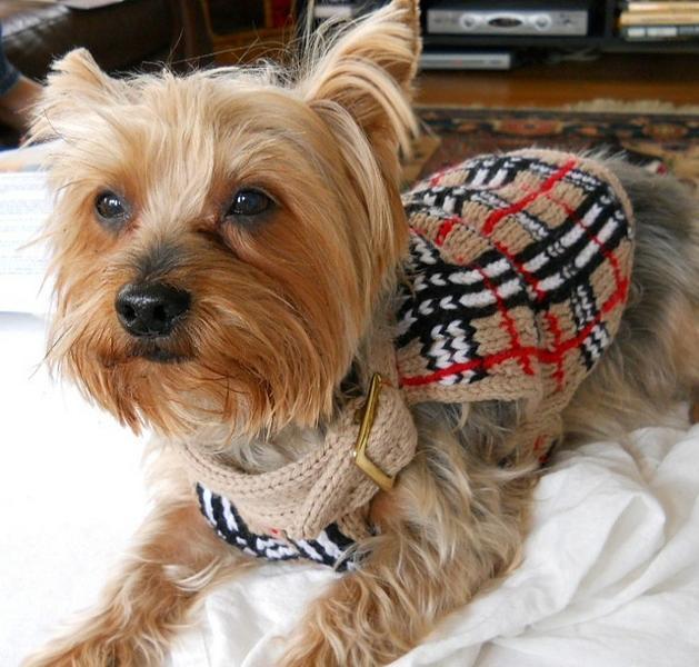 Plaid Dog Sweaters photo - 3