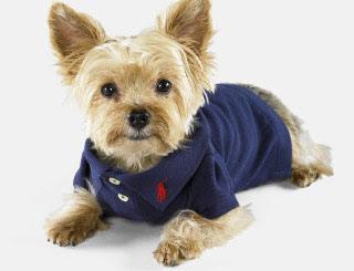 Polo Dog Clothes photo - 2