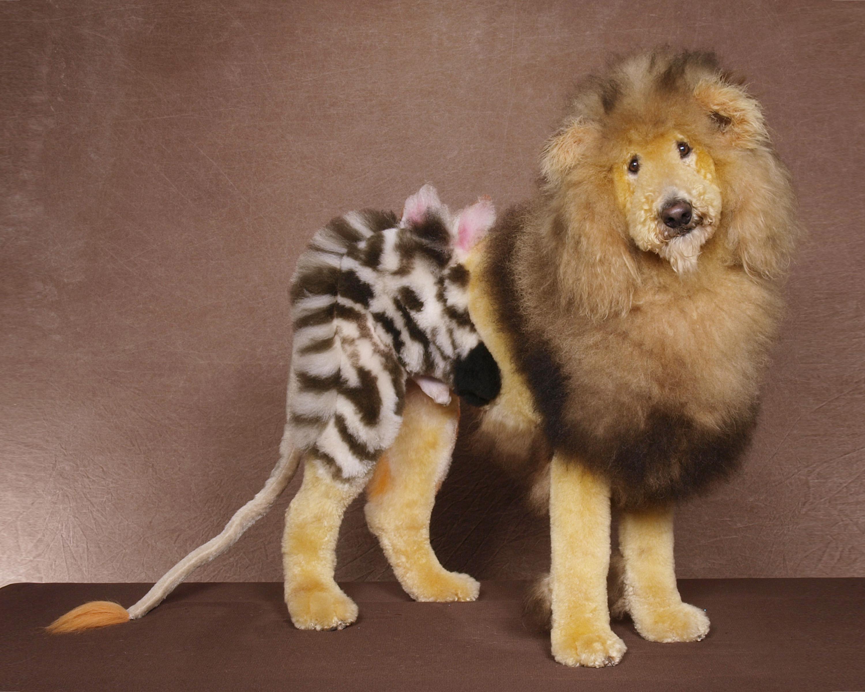 Poodle Lion Haircut Dress The Dog Clothes For Your Pets