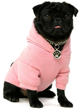 Pug Dog Clothes ▻ Dress The Dog , clothes for your pets!