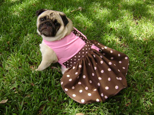 Pug Dog Dress photo - 1