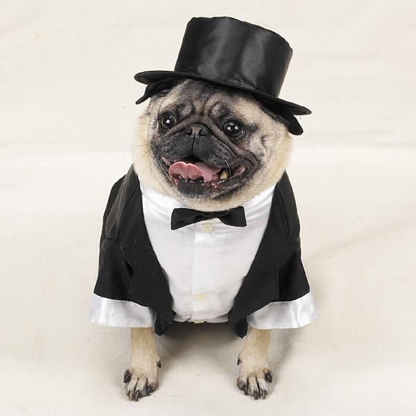 Pug Dog Outfits photo - 2