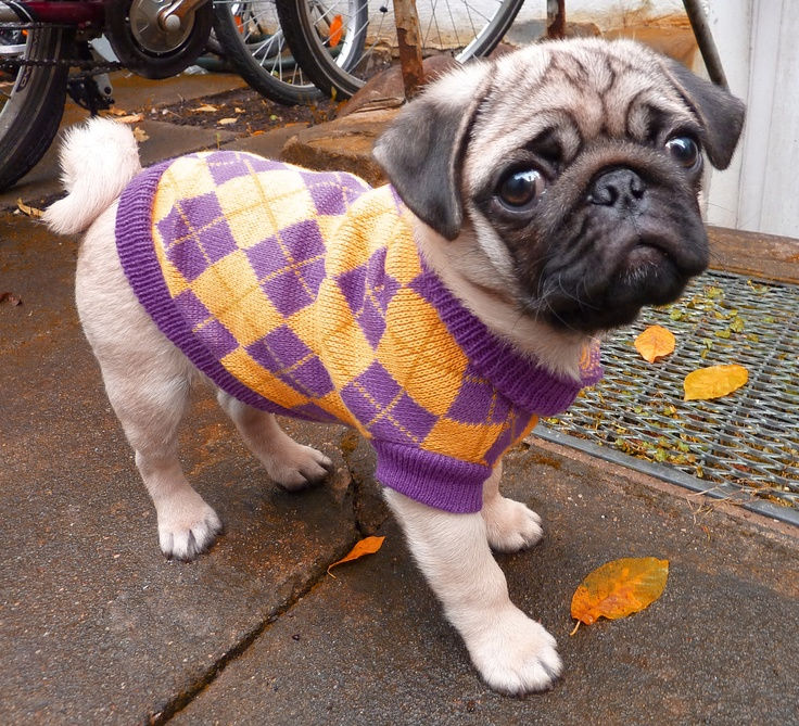 Pug Puppy Clothes photo - 1
