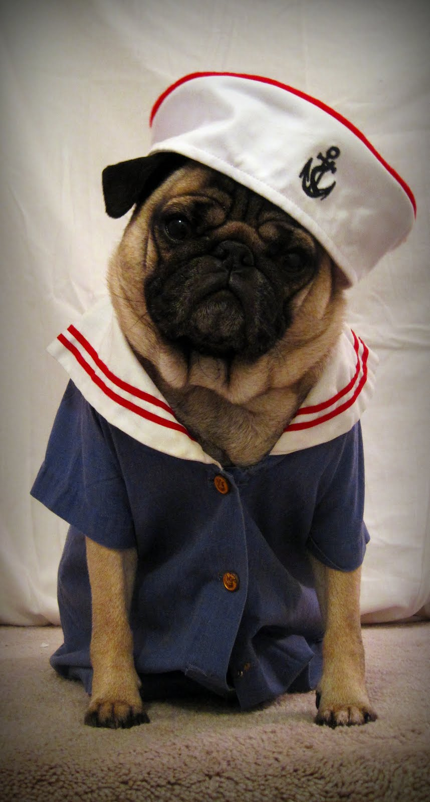 Pugs Clothes Dress The Dog Clothes For Your Pets