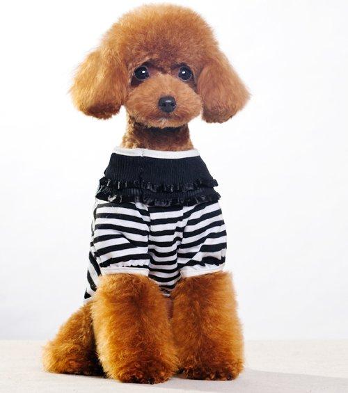 Puppie Clothes photo - 3