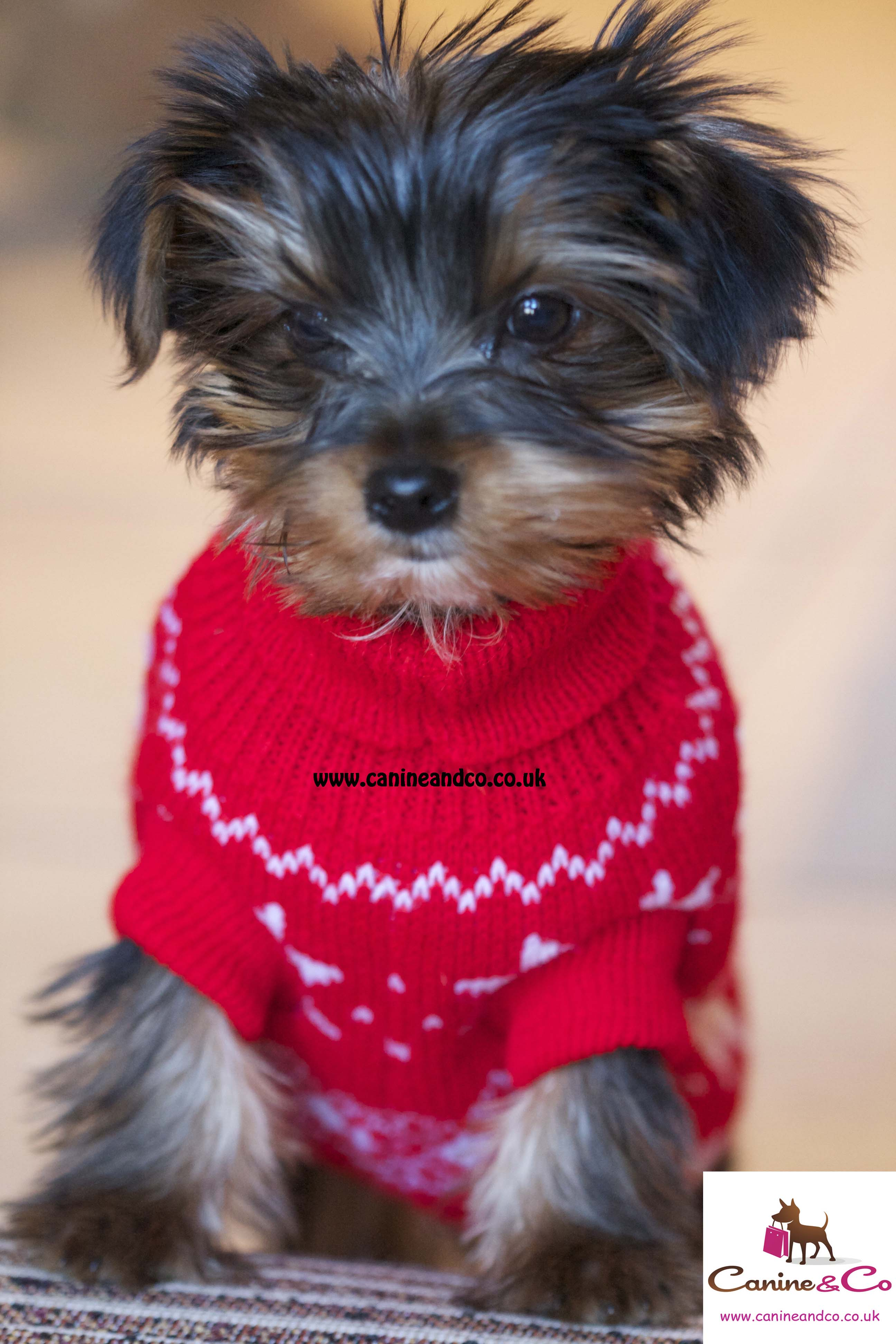 Petco Dog Sweaters