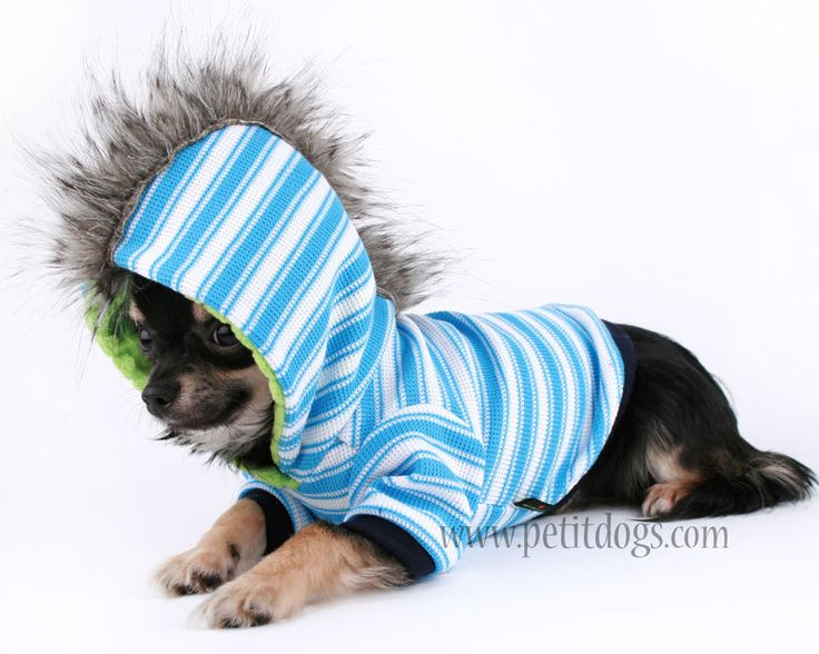 Puppy Clothes For Boys photo - 3