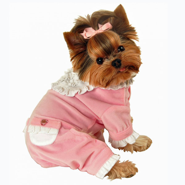 Puppy Clothes For Girls photo - 3