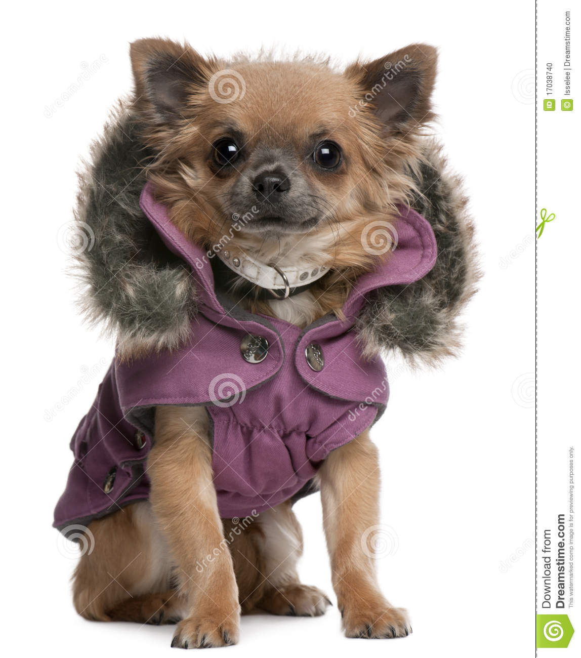 Puppy Coat photo - 1