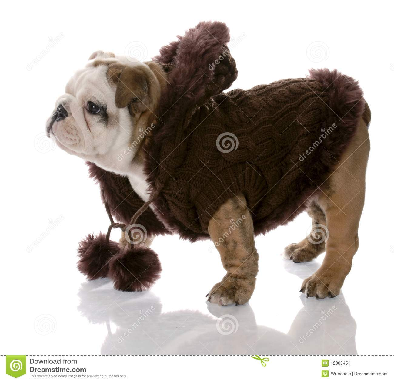 Puppy Coats photo - 1
