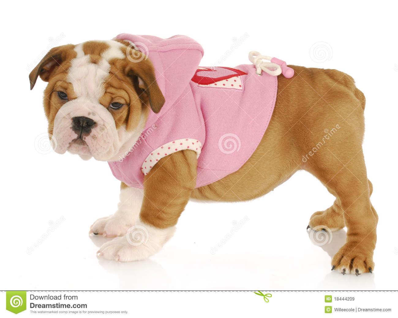 Puppy Dog Coats photo - 2
