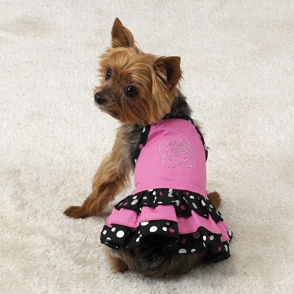 Puppy In Clothes photo - 2