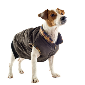 Puppy Waterproof Coats photo - 1