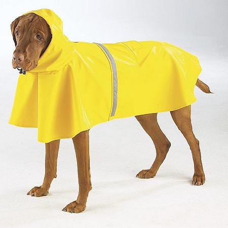 Rain Gear For Dogs photo - 1