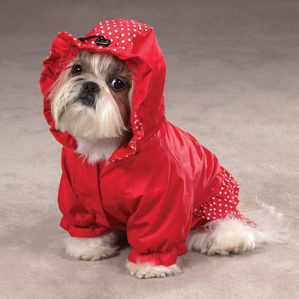 Raincoat Dog photo - 1
